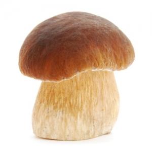 Семена грибов (МИЦЕЛИЙ)