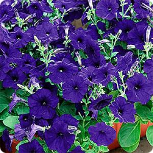 Цветы Биотехника
