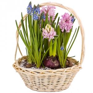 Луковичные и Многолетние Цветы (Весна-Лето 2019)