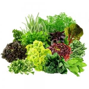 Семена пряных и зеленых культур