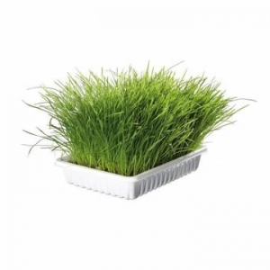 Трава, газон