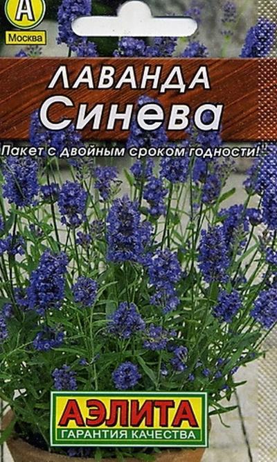 Лаванда Синева (А)