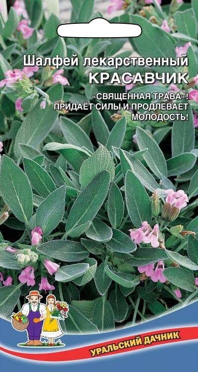 Шалфей лекарственный КРАСАВЧИК