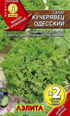 Салат Кучерявец Одесский полукочанный