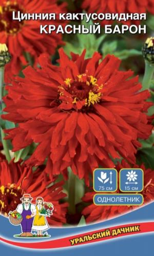 Цинния кактусовидная КРАСНЫЙ БАРОН