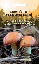 Грибы Масленок Обыкновенный