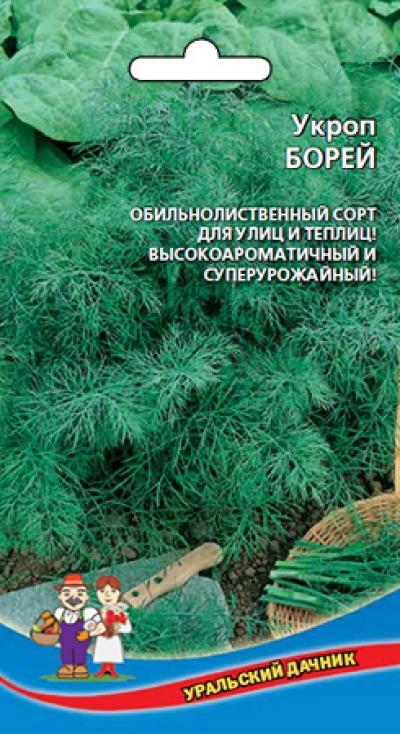 Укроп Борей